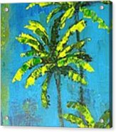 Palm Trees Acrylic Print by Patricia Awapara