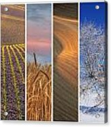 Palouse Seasons Acrylic Print by Doug Davidson