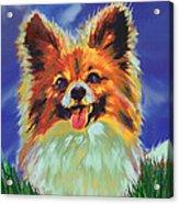Papillion Puppy Acrylic Print by Jane Schnetlage