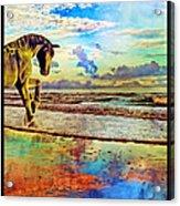 Paradise Sunset Acrylic Print by Betsy Knapp