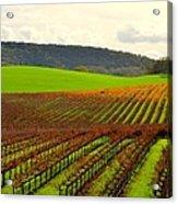 Pastoral Vineyards Of Asti Acrylic Print by Antonia Citrino