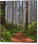 Path Thru The Redwoods Acrylic Print by Michael  Ayers