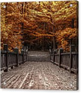 Path To The Wild Wood Acrylic Print by Scott Norris