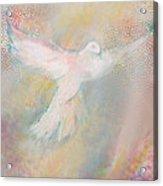 Peace Dove Acrylic Print by Anne Cameron Cutri