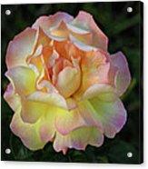 Peace Rose Acrylic Print by Sandy Keeton