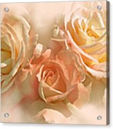 Peach Roses In The Mist Acrylic Print by Jennie Marie Schell