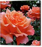 Peach Roses Acrylic Print by Rona Black