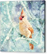 Peaches In The Snow Acrylic Print by Amy Tyler