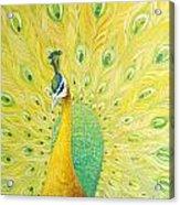 Peacock Acrylic Print by Willson Lau