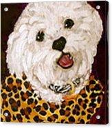Pebbles Acrylic Print by Debi Starr