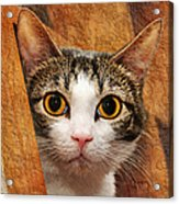 Peek A Boo I See You Acrylic Print by Andee Design