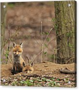 Peeking From The Fox Hole Acrylic Print by Everet Regal