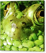 Peeping Through The Algae  Acrylic Print by Optical Playground By MP Ray