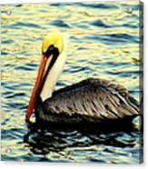 Pelican Waters Acrylic Print by Karen Wiles