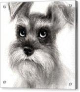 Pensive Schnauzer Dog Painting Acrylic Print by Svetlana Novikova