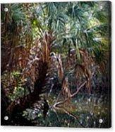 Pepper Creek Palm Acrylic Print by Sheri McLeroy