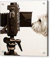 Pho Dog Grapher Acrylic Print by Edward Fielding