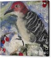 Pileated Wood Pecker Acrylic Print by Shakti Chionis