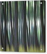 Pine Forest. Blurred Acrylic Print by Bernard Jaubert