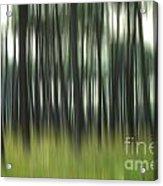 Pine Forest.blurred Acrylic Print by Bernard Jaubert