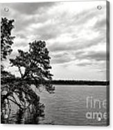 Pinelands Memories Acrylic Print by Olivier Le Queinec