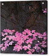 Pink Fall Colors In Sedona Arizona Acrylic Print by Dave Dilli