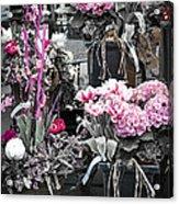 Pink Flower Arrangements Acrylic Print by Elena Elisseeva