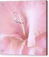 Pink Gladiolus Flower Acrylic Print by Jennie Marie Schell