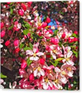 Pink Magnolia 2 Acrylic Print by Joann Vitali