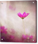 Pink Nouveau Acrylic Print by Amy Tyler