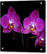 Pink Orchid  Acrylic Print by Toppart Sweden