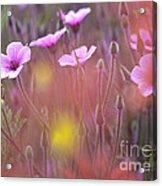 Pink Wild Geranium Acrylic Print by Heiko Koehrer-Wagner