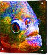 Piranha Acrylic Print by Wingsdomain Art and Photography