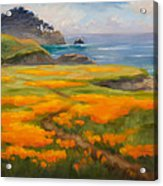 Point Lobos Poppies Acrylic Print by Karin  Leonard