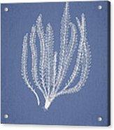 Polypodium Fuscatum Acrylic Print by Aged Pixel