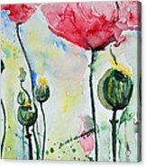 Poppies Acrylic Print by Ismeta Gruenwald