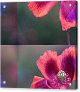 Poppy Acrylic Print by Eiwy Ahlund