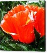 Poppy Flower Acrylic Print by Heather L Wright