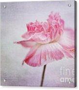 Poppy Poem Acrylic Print by Priska Wettstein
