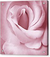 Porcelain Pink Rose Flower Acrylic Print by Jennie Marie Schell