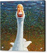 Portrait Of A Goose Acrylic Print by James W Johnson