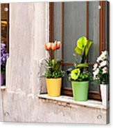 Potted Flowers 02 Acrylic Print by Rick Piper Photography