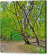 Poudre Trees-2 Acrylic Print by Baywest Imaging