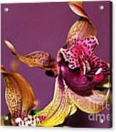Pretty Orchid On Pink Acrylic Print by Kaye Menner