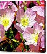 Pretty Purple Acrylic Print by Marty Koch