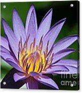 Pretty Purple Petals Acrylic Print by Sabrina L Ryan