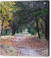 Primrose Path Ramble Acrylic Print by Wendy J St Christopher