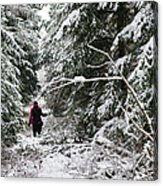 Protective Forest In Winter With Snow Covered Conifer Trees Acrylic Print by Matthias Hauser