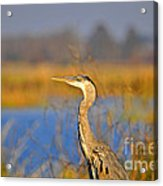 Proud Profile Acrylic Print by Al Powell Photography USA