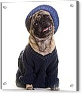 Pug In Sweater And Hat Acrylic Print by Edward Fielding